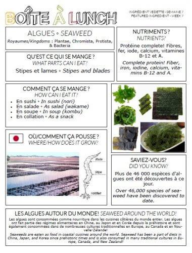Algues / Seaweed